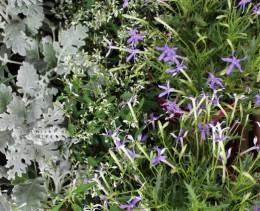 silberblatt-blumen-kräntzer